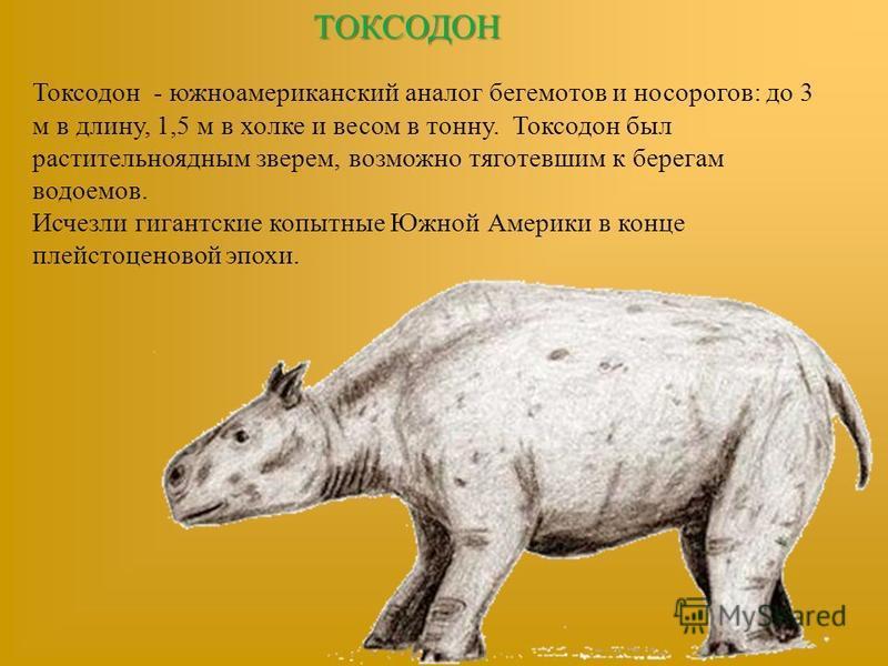 ТОКСОДОН Токсодон - южноамериканский аналог бегемотов и носорогов: до 3 м в длину, 1,5 м в холке и весом в тонну. Токсодон был растительноядным зверем, возможно тяготевшим к берегам водоемов. Исчезли гигантские копытные Южной Америки в конце плейстоц
