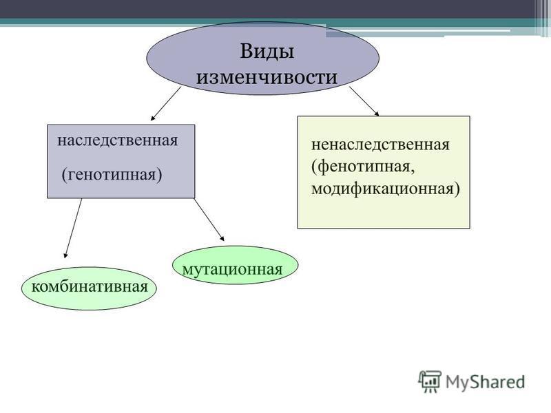 наследственная ненаследственная (фенотипная, модификационная) (генотипная) комбинативная мутационная Виды изменчивости
