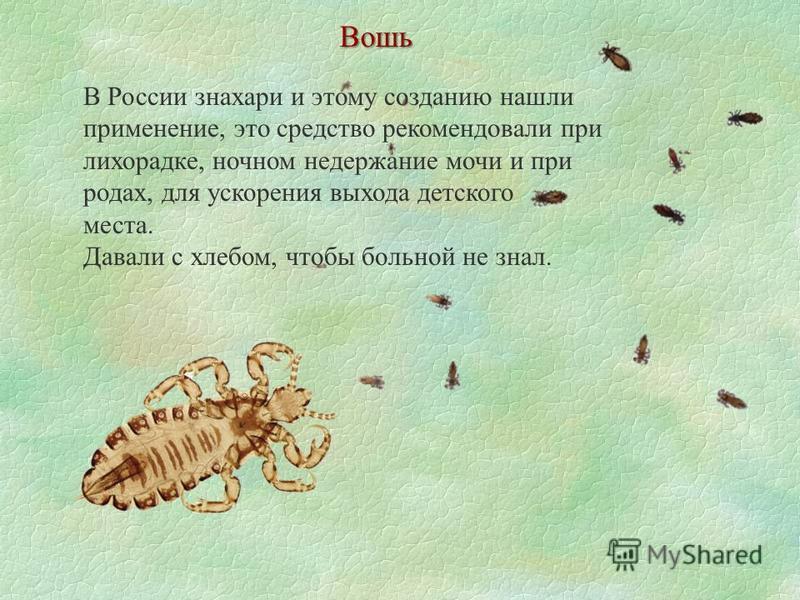 Вошь В России знахари и этому созданию нашли применение, это средство рекомендовали при лихорадке, ночном недержание мочи и при родах, для ускорения выхода детского места. Давали с хлебом, чтобы больной не знал.