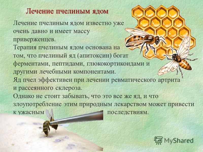 Лечение пчелиным ядом Лечение пчелиным ядом известно уже очень давно и имеет массу приверженцев. Терапия пчелиным ядом основана на том, что пчелиный яд (апитоксин) богат ферментами, пептидами, глюкокортикоидами и другими лечебными компонентами. Яд пч