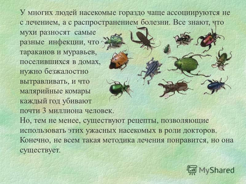 У многих людей насекомые гораздо чаще ассоциируются не с лечением, а с распространением болезни. Все знают, что мухи разносят самые разные инфекции, что тараканов и муравьев, поселившихся в домах, нужно безжалостно вытравливать, и что малярийные кома