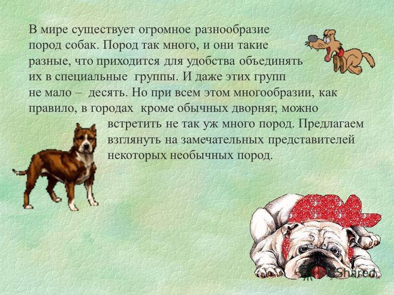 В мире существует огромное разнообразие пород собак. Пород так много, и они такие разные, что приходится для удобства объединять их в специальные группы. И даже этих групп не мало – десять. Но при всем этом многообразии, как правило, в городах кроме