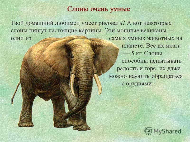 Слоны очень умные Твой домашний любимец умеет рисовать? А вот некоторые слоны пишут настоящие картины. Эти мощные великаны одни из самых умных животных на планете. Вес их мозга 5 кг. Слоны способны испытывать радость и горе, их даже можно научить обр