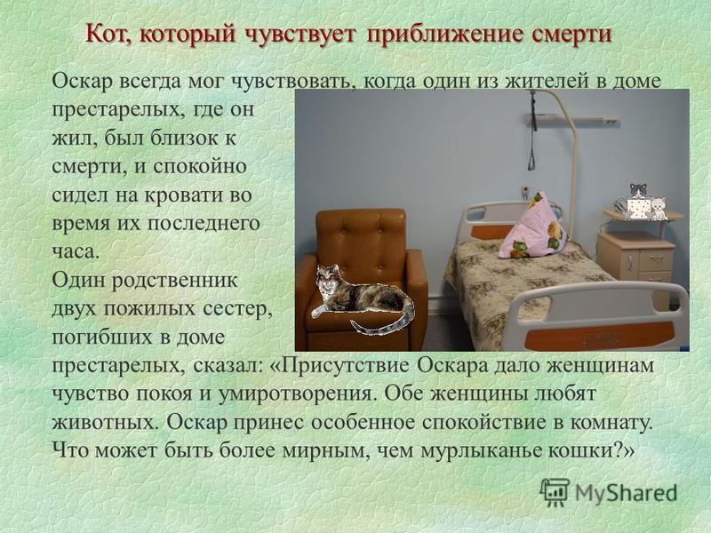 Кот, который чувствует приближение смерти Оскар всегда мог чувствовать, когда один из жителей в доме престарелых, где он жил, был близок к смерти, и спокойно сидел на кровати во время их последнего часа. Один родственник двух пожилых сестер, погибших