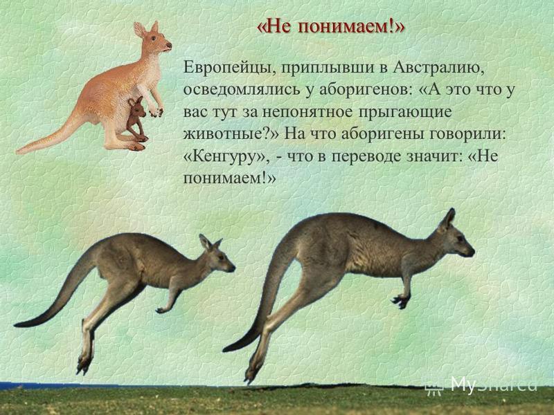 Европейцы, приплывши в Австралию, осведомлялись у аборигенов: «А это что у вас тут за непонятное прыгающие животные?» На что аборигены говорили: «Кенгуру», - что в переводе значит: «Не понимаем!» «Не понимаем!»