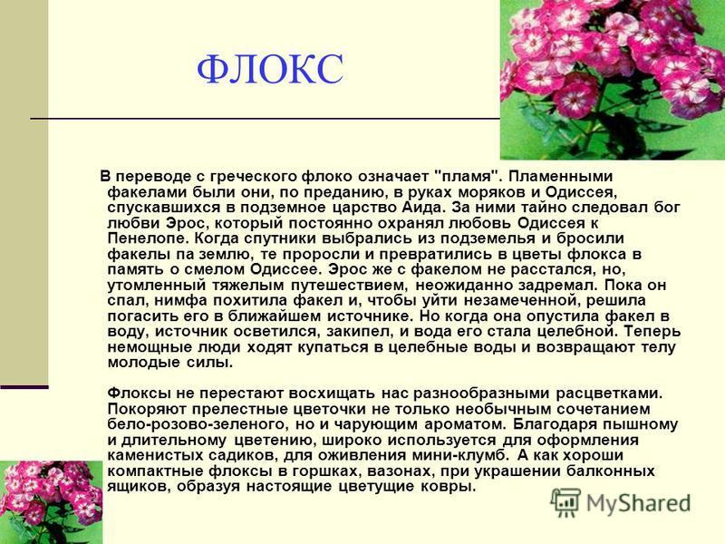 ФЛОКС В переводе с греческого флоко означает