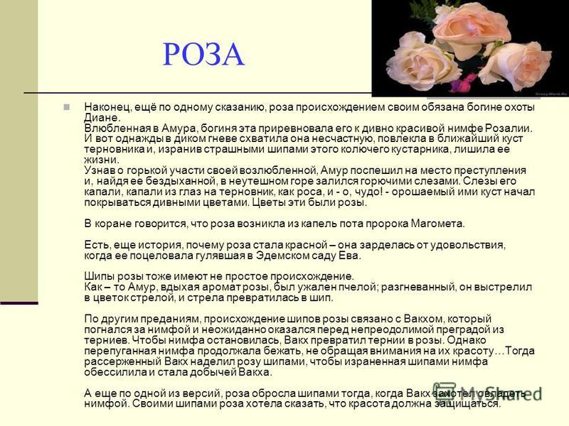 РОЗА Наконец, ещё по одному сказанию, роза происхождением своим обязана богине охоты Диане. Влюбленная в Амура, богиня эта приревновала его к дивно красивой нимфе Розалии. И вот однажды в диком гневе схватила она несчастную, повлекла в ближайший куст