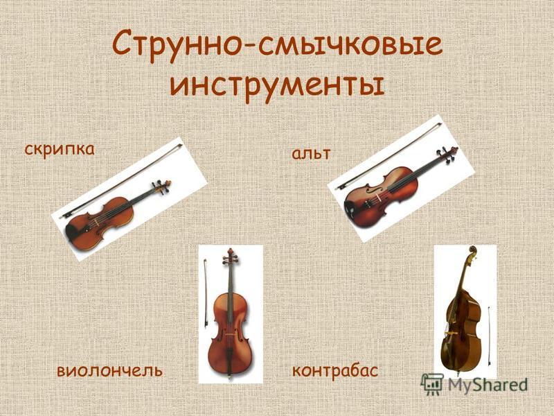 Струнно-смычковые инструменты скрипка альт виолончель контрабас