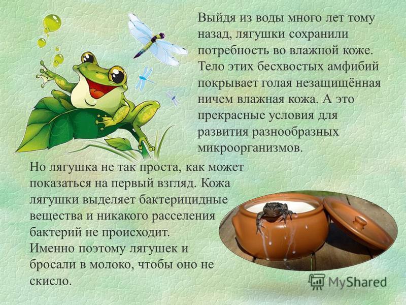 Выйдя из воды много лет тому назад, лягушки сохранили потребность во влажной коже. Тело этих бесхвостых амфибий покрывает голая незащищённая ничем влажная кожа. А это прекрасные условия для развития разнообразных микроорганизмов. Но лягушка не так пр
