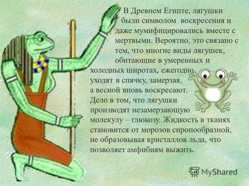 В Древнем Египте, лягушки были символом воскресения и даже мумифицировались вместе с мертвыми. Вероятно, это связано с тем, что многие виды лягушек, обитающие в умеренных и холодных широтах, ежегодно уходят в спячку, замерзая, а весной вновь воскреса