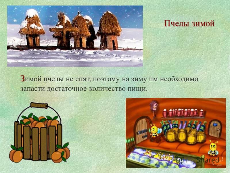 Пчелы зимой З З имой пчелы не спят, поэтому на зиму им необходимо запасти достаточное количество пищи.