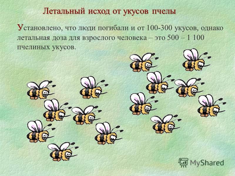 Летальный исход от укусов пчелы У У становлено, что люди погибали и от 100-300 укусов, однако летальная доза для взрослого человека – это 500 – 1 100 пчелиных укусов.