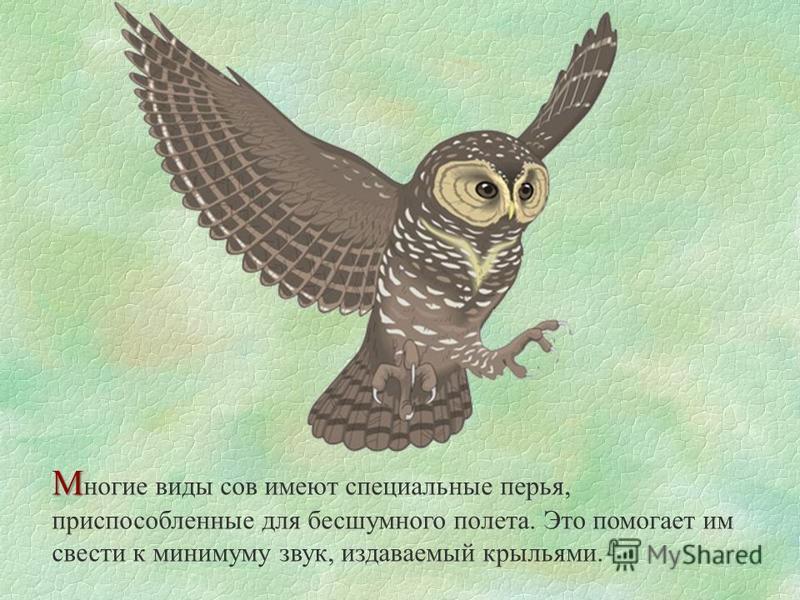 М М ногие виды сов имеют специальные перья, приспособленные для бесшумного полета. Это помогает им свести к минимуму звук, издаваемый крыльями.