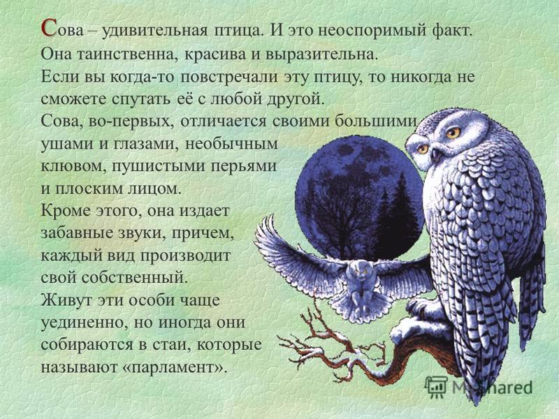 С С ева – удивительная птица. И это неоспоримый факт. Она таинственна, красива и выразительна. Если вы когда-то повстречали эту птицу, то никогда не сможете спутать её с любой другой. Сева, во-первых, отличается своими большими ушами и глазами, необы