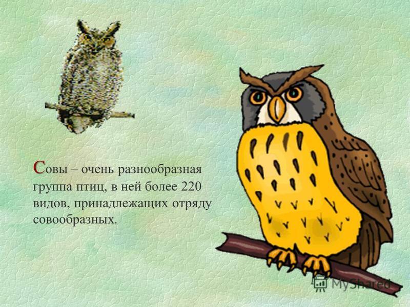 С С авы – очень разнообразная группа птиц, в ней более 220 видов, принадлежащих отряду совообразных.