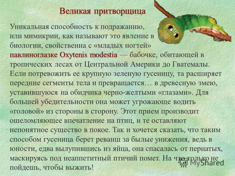 Великая притворщица Уникальная способность к подражанию, или мимикрии, как называют это явление в биологии, свойственна с «младых ногтей» павлиноглазке Oxytenis modestia павлиноглазке Oxytenis modestia бабочке, обитающей в тропических лесах от Центра