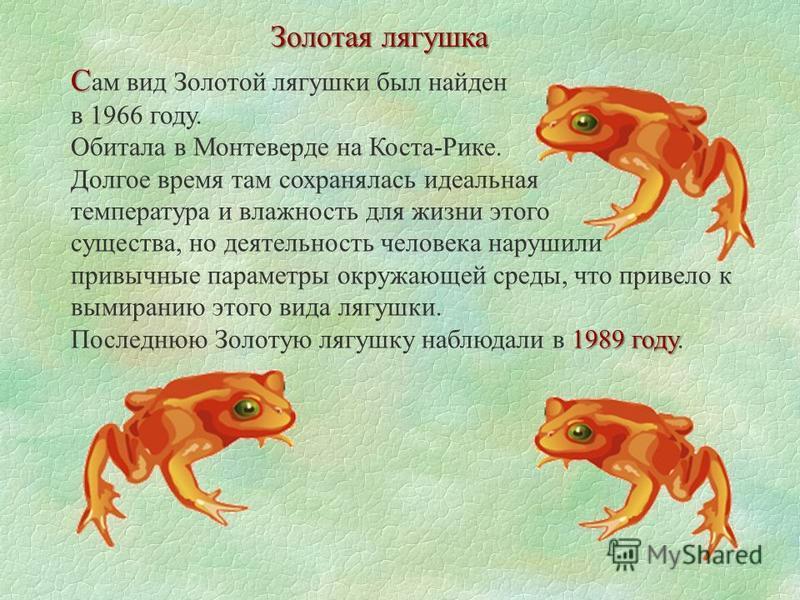 Золотая лягушка С С ам вид Золотой лягушки был найден в 1966 году. Обитала в Монтеверде на Коста-Рике. Долгое время там сохранялась идеальная температура и влажность для жизни этого существа, но деятельность человека нарушили привычные параметры окру