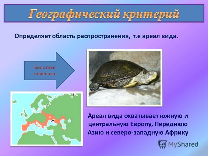 Определяет область распространения, т.е ареал вида. Ареал вида охватывает южную и центральную Европу, Переднюю Азию и северо-западную Африку Болотная черепаха