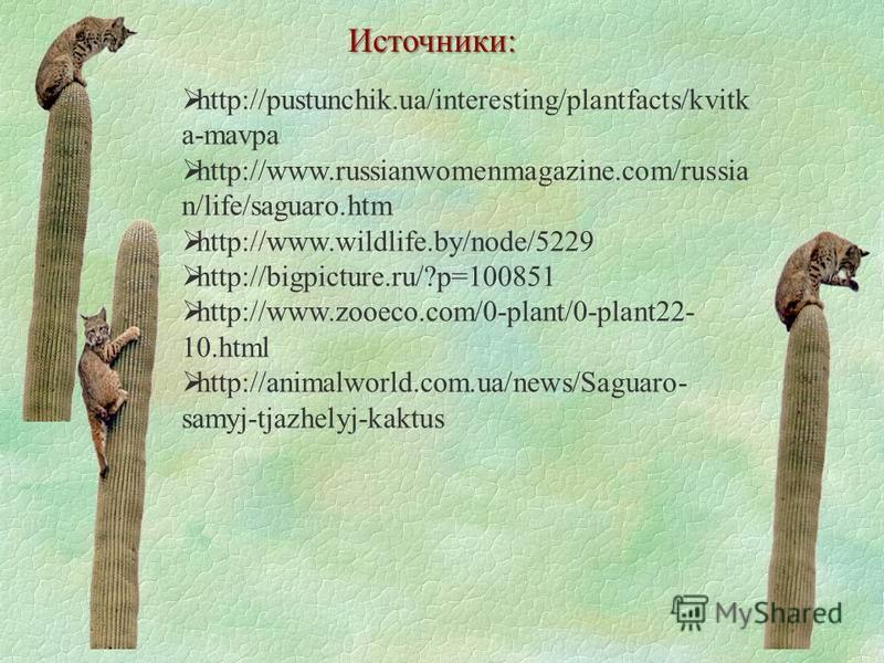 Источники: http://pustunchik.ua/interesting/plantfacts/kvitk a-mavpa http://www.russianwomenmagazine.com/russia n/life/saguaro.htm http://www.wildlife.by/node/5229 http://bigpicture.ru/?p=100851 http://www.zooeco.com/0-plant/0-plant22- 10. html http: