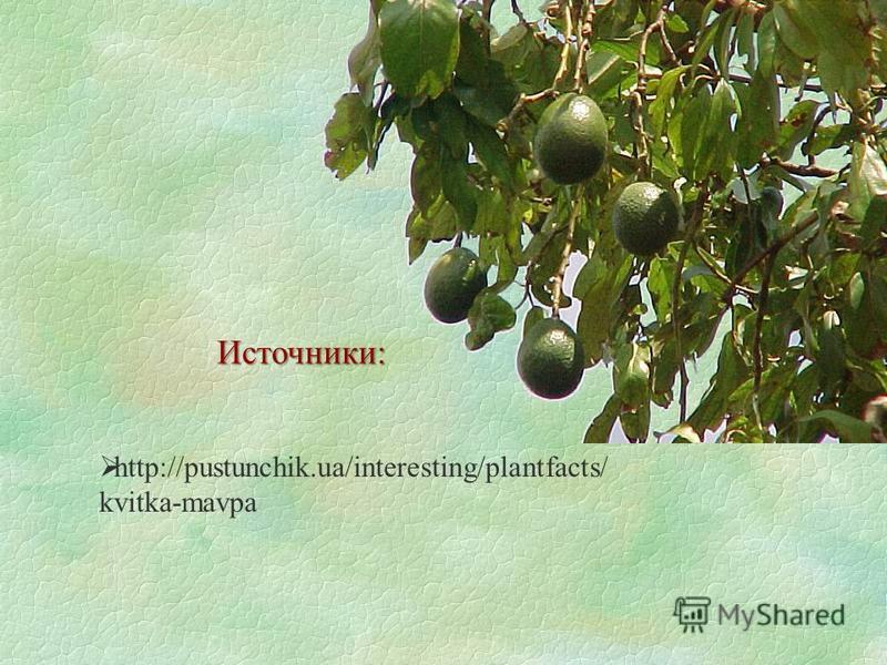 http://pustunchik.ua/interesting/plantfacts/ kvitka-mavpa Источники: