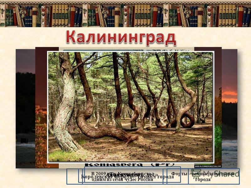Королевские ворота – символ города Лифт к морю В 2009 году Кенигсберг стал одним из семи чудес России Форты – вечные защитники города «Танцующий лес»