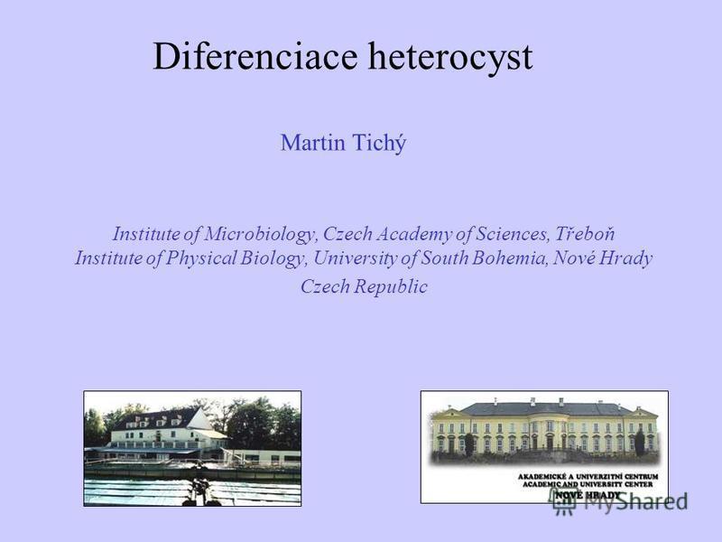 Diferenciace heterocyst Martin Tichý Martin Tichý Institute of Microbiology, Czech Academy of Sciences, Třeboň Institute of Physical Biology, University of South Bohemia, Nové Hrady Czech Republic