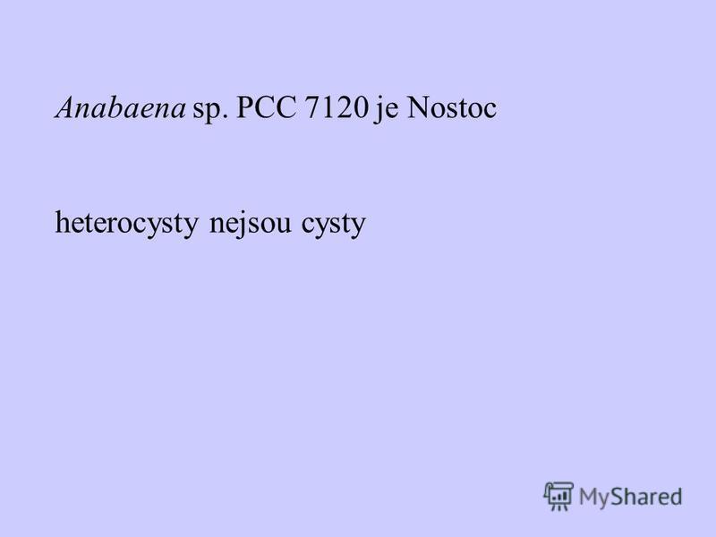 Anabaena sp. PCC 7120 je Nostoc heterocysty nejsou cysty