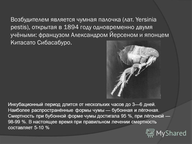 Возбудителем является чумная палочка (лат. Yersinia pestis), открытая в 1894 году одновременно двумя учёными: французом Александром Йерсеном и японцем Китасато Сибасабуро. Инкубационный период длится от нескольких часов до 36 дней. Наиболее распростр