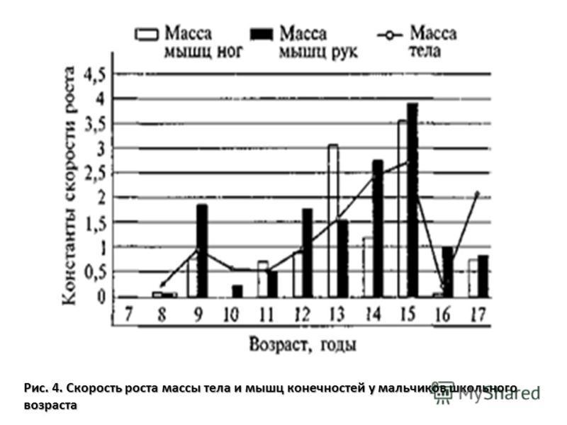Рис. 4. Скорость роста массы тела и мышц конечностей у мальчиков школьного возраста