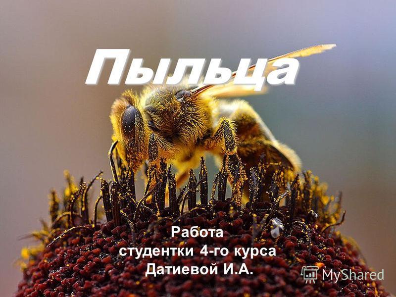 Пыльца Работа студентки 4-го курса Датиевой И.А.