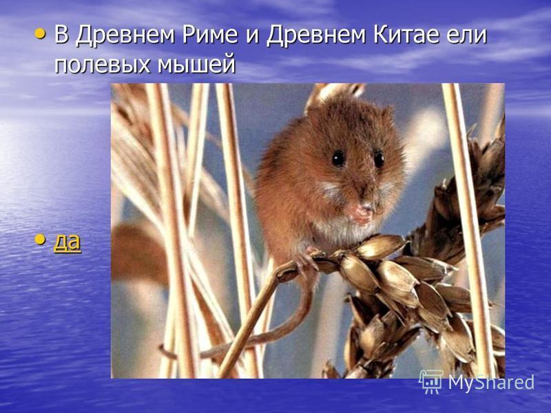 В Древнем Риме и Древнем Китае ели полевых мышей В Древнем Риме и Древнем Китае ели полевых мышей да да да