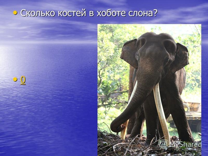 Сколько костей в хоботе слона? Сколько костей в хоботе слона? 0 0