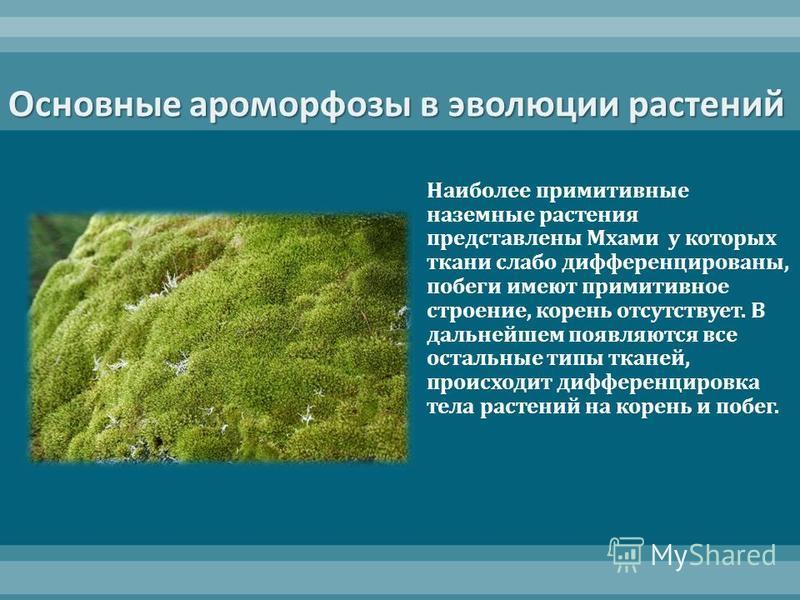 Основные ароморфозы в эволюции растений Наиболее примитивные наземные растения представлены Мхами у которых ткани слабо дифференцированы, побеги имеют примитивное строение, корень отсутствует. В дальнейшем появляются все остальные типы тканей, происх