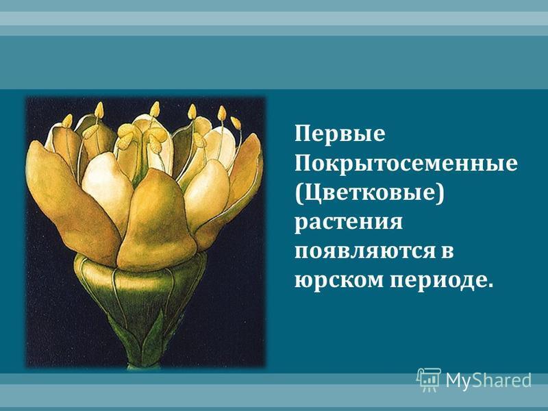 Первые Покрытосеменные ( Цветковые ) растения появляются в юрском периоде.
