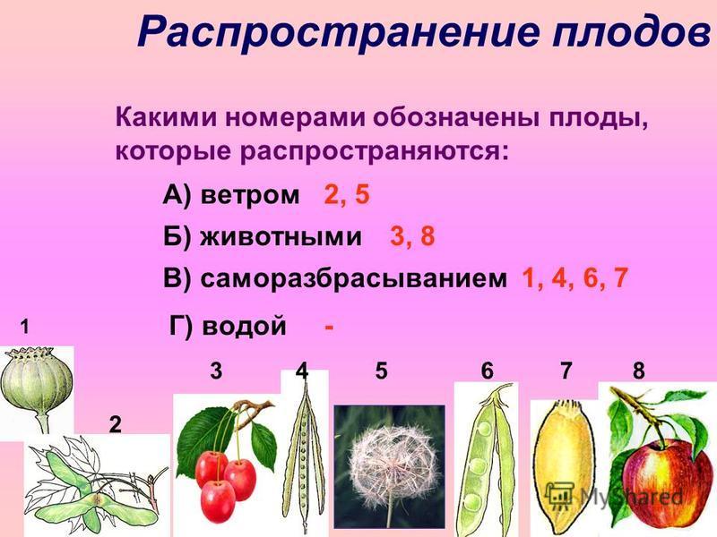 Распространение плодов 3 4 5 6 7 8 1 Какими номерами обозначены плоды, которые распространяются: А) ветром Б) животными В) саморазбрасыванием Г) водой 2 2, 5 3, 8 1, 4, 6, 7 -