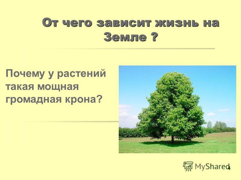 От чего зависит жизнь на Земле ? Почему у растений такая мощная громадная крона? 4