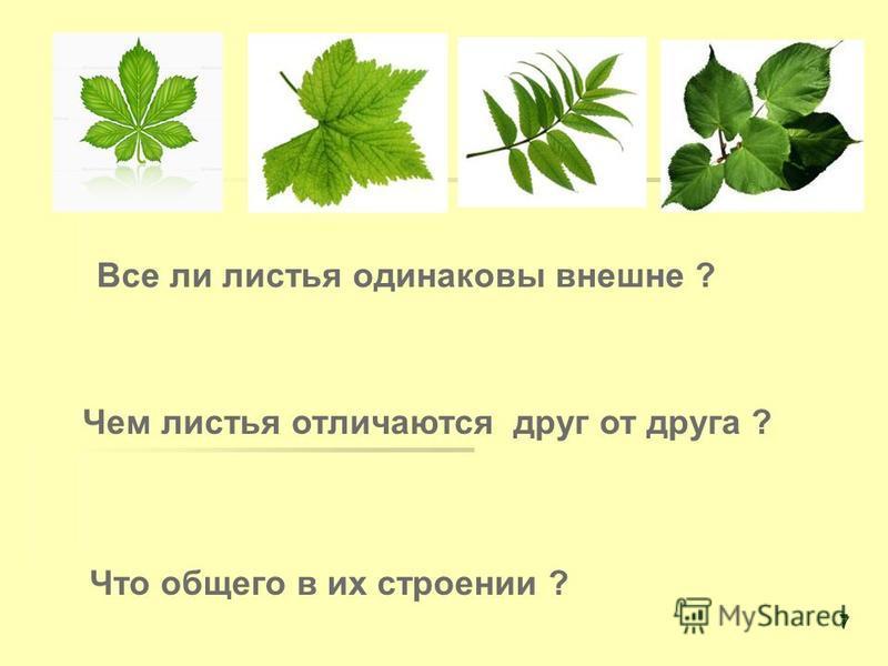 Все ли листья одинаковы внешне ? Чем листья отличаются друг от друга ? Что общего в их строении ? 7