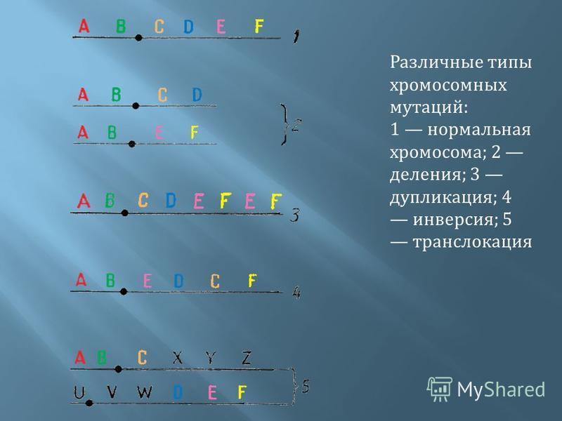Различные типы хромосомных мутаций : 1 нормальная хромосома ; 2 деления ; 3 дупликация ; 4 инверсия ; 5 транслокация