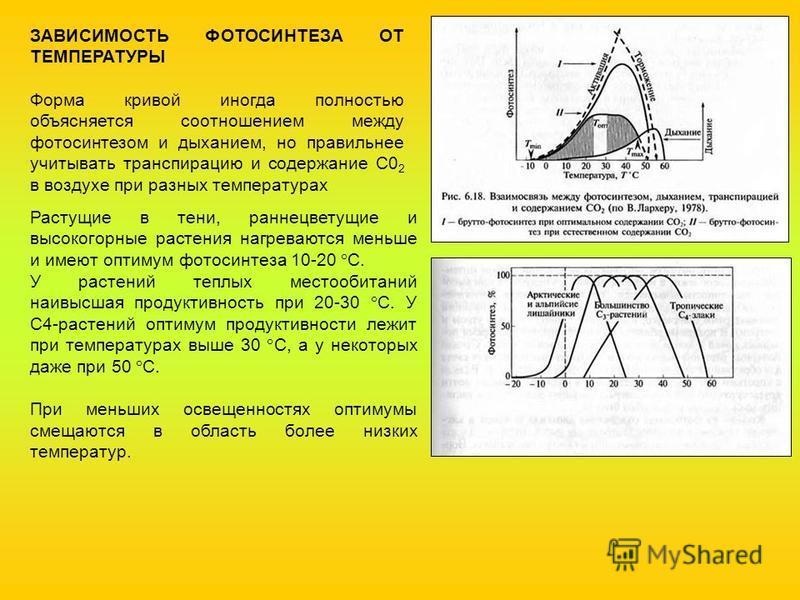 ЗАВИСИМОСТЬ ФОТОСИНТЕЗА ОТ ТЕМПЕРАТУРЫ Форма кривой иногда полностью объясняется соотношением между фотосинтезом и дыханием, но правильнее учитывать транспирацию и содержание С0 2 в воздухе при разных температурах Растущие в тени, раннецветущие и выс