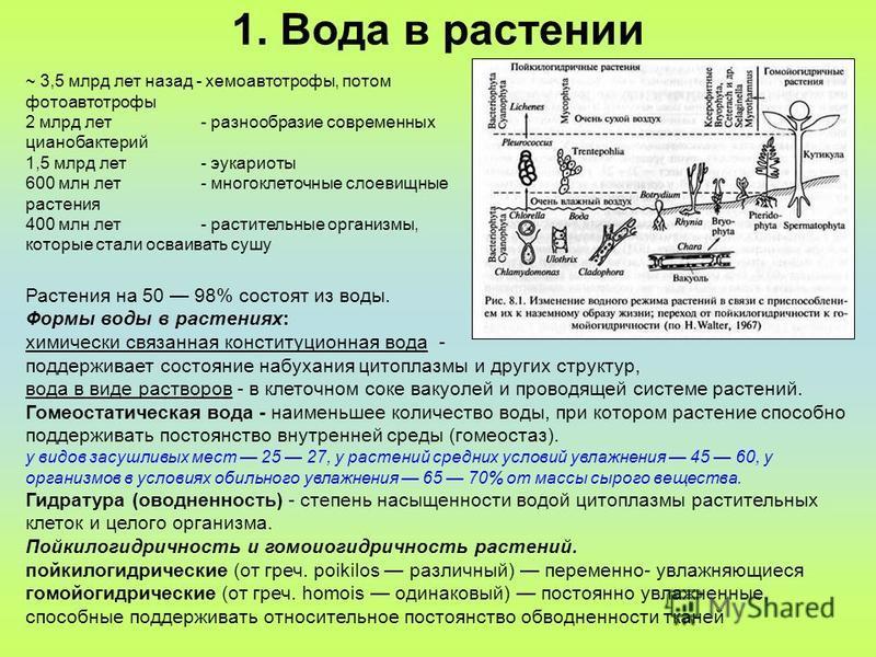 1. Вода в растении ~ 3,5 млрд лет назад - хемоавтотрофы, потом фотоавтотрофы 2 млрд лет - разнообразие современных цианобактерий 1,5 млрд лет - эукариоты 600 млн лет- многоклеточные слоевищные растения 400 млн лет - растительные организмы, которые ст
