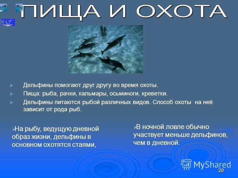 Дельфины помогают друг другу во время охоты. Пища: рыба, рачки, кальмары, осьминоги, креветки. Дельфины питаются рыбой различных видов. Способ охоты на неё зависит от рода рыб. В ночной ловле обычно участвует меньше дельфинов, чем в дневной. На рыбу,