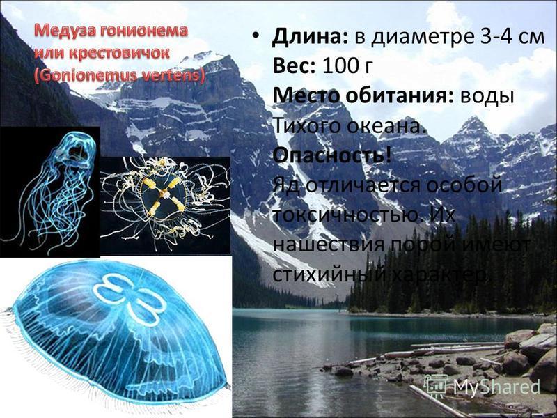 Длина: в диаметре 3-4 см Вес: 100 г Место обитания: воды Тихого океана. Опасность! Яд отличается особой токсичностью. Их нашествия порой имеют стихийный характер.