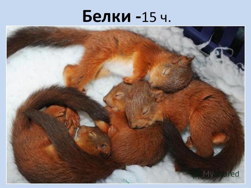 Белки - 15 ч.