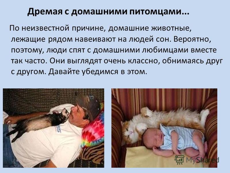 По неизвестной причине, домашние животные, лежащие рядом навеивают на людей сон. Вероятно, поэтому, люди спят с домашними любимцами вместе так часто. Они выглядят очень классно, обнимаясь друг с другом. Давайте убедимся в этом. Дремая с домашними пит