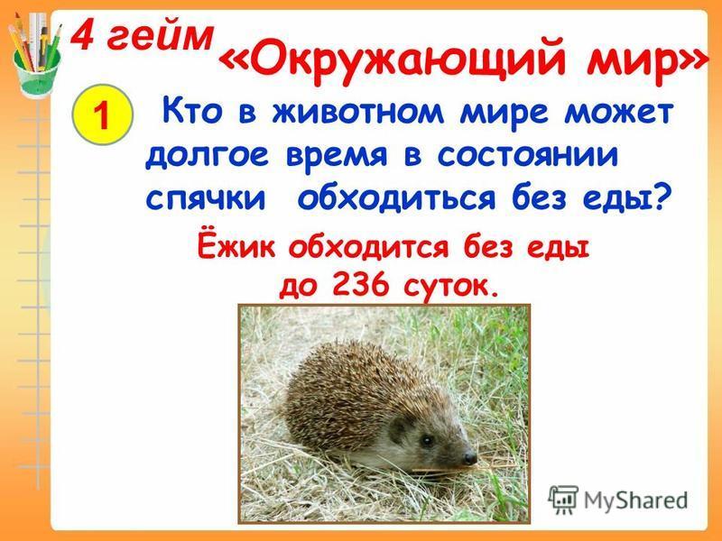 4 гейм «Окружающий мир» 1 Кто в животном мире может долгое время в состоянии спячки обходиться без еды? Ёжик обходится без еды до 236 суток.