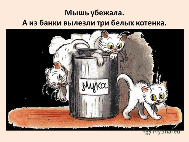 Мышь убежала. А из банки вылезли три белых котенка.