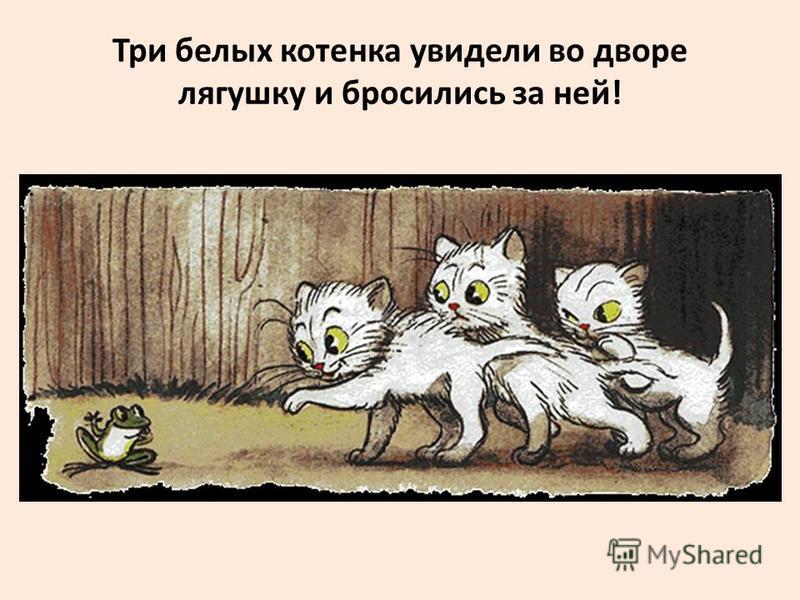Три белых котенка увидели во дворе лягушку и бросились за ней!