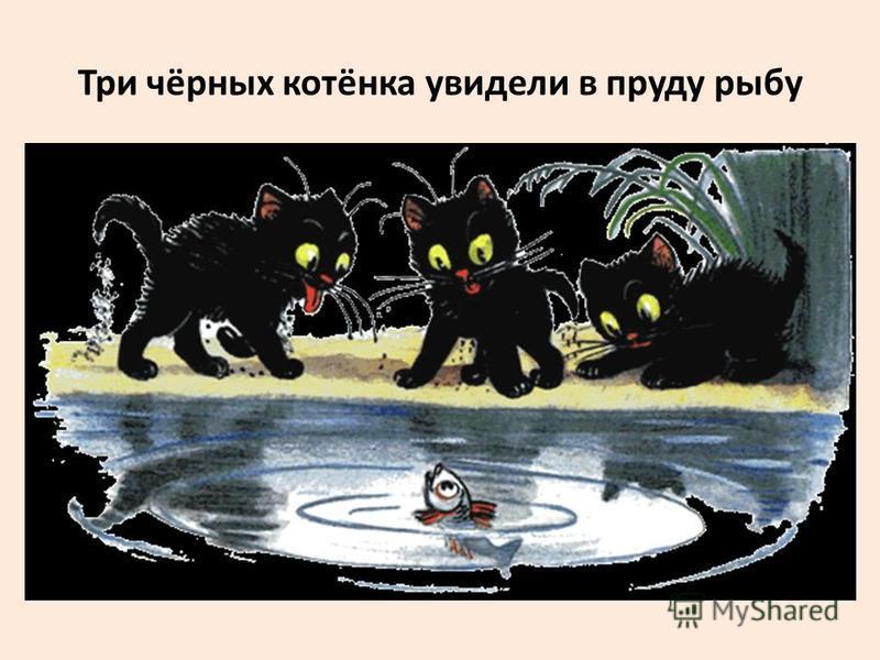 Три чёрных котёнка увидели в пруду рыбу