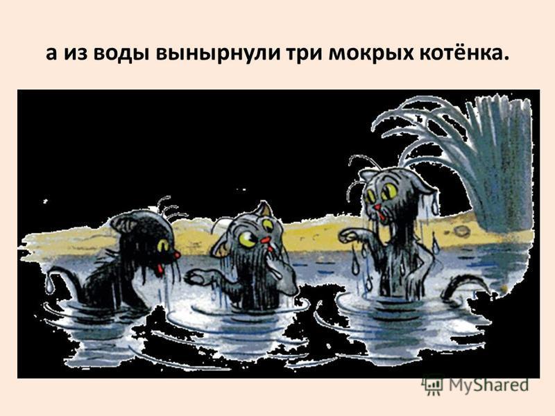 а из воды вынырнули три мокрых котёнка.