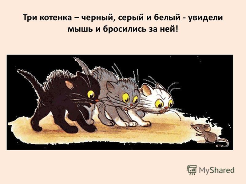 Три котенка – черный, серый и белый - увидели мышь и бросились за ней!